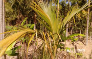 Best price for 68 cent land for sale near  Bathery