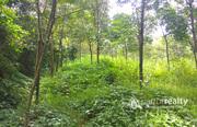 7.50 acre land @ 12 lakh/acre in Kattimoola. Wayanad