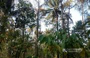 Well Demanded 2.80 acre land @ 40 lakh in Marakkadavu. Wayanad