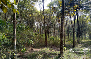 Well maintained 2 acre land for sale near Nadavayal @ 23lakh/acre