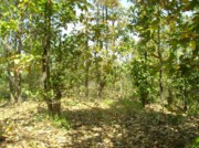 suitable Land for resort for sale near Mukki Gate at Kanha