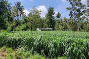 1 acre Agriculture land for sale near Pulpally @ 20 lakhs…..