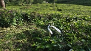 40 cents Agriculture Land For Sale in Ketti Palada Ooty