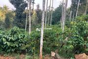 60 cent land for sale in Arivayal near Bathery…..